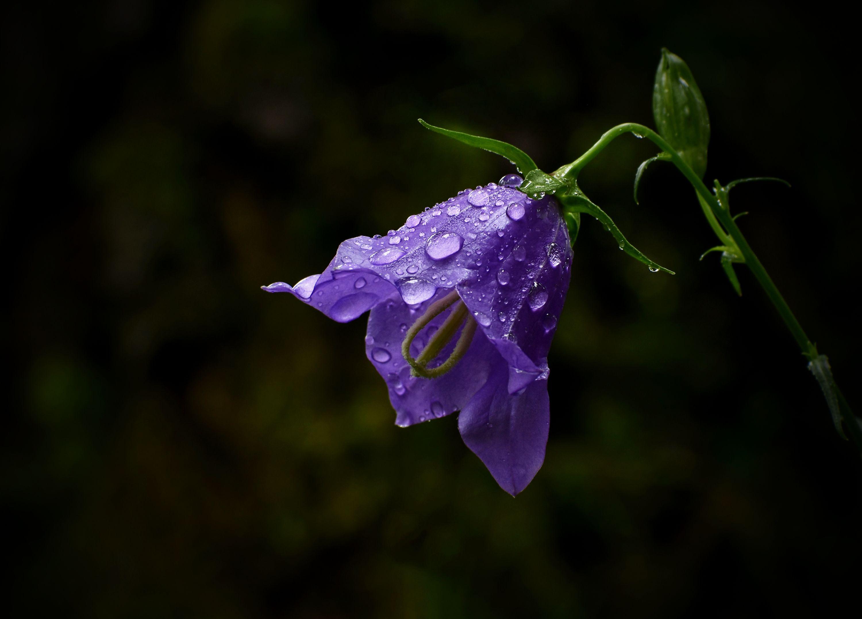 Po dešti.