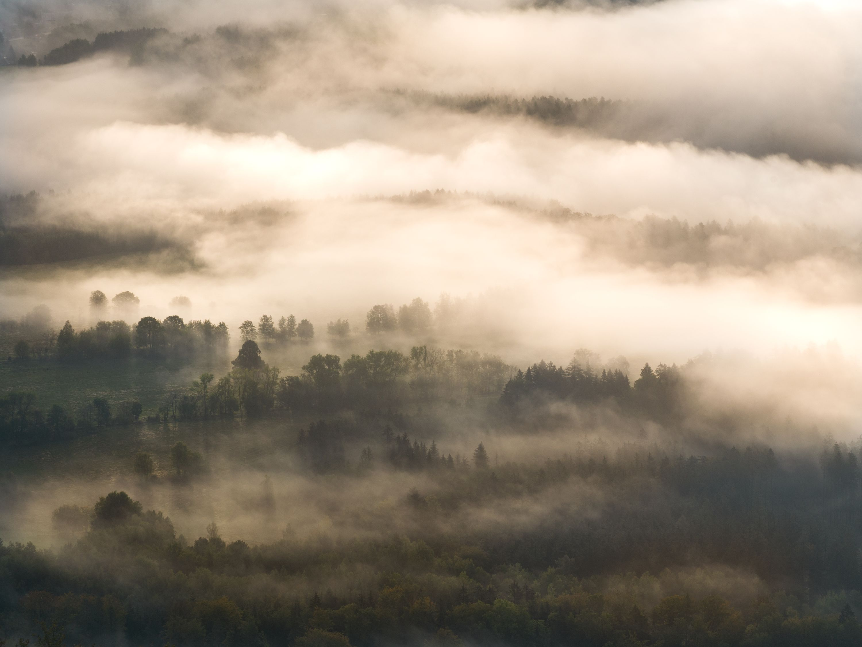 Foggy morning in Lusatian mountains