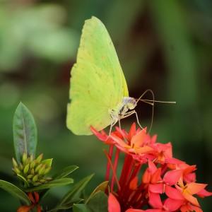 O beijo da borboleta